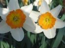 Flower Record