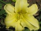 Amarilla 600Ft