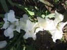 Bright White - Elfogyott!