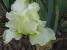Cotton Blossom - Elfogyott!