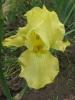 Iris Tune 400Ft