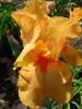 Orange Are