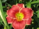 RosesinSnowIMG_0873