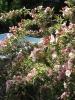 Rózsaszín lonc